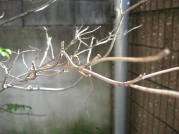 20090415_01.JPG